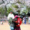 若宮神社でこども相撲 満開のサクラの下 50人が熱戦