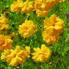咲き誇る美しい花…実はそれ「特定外来生物」かも